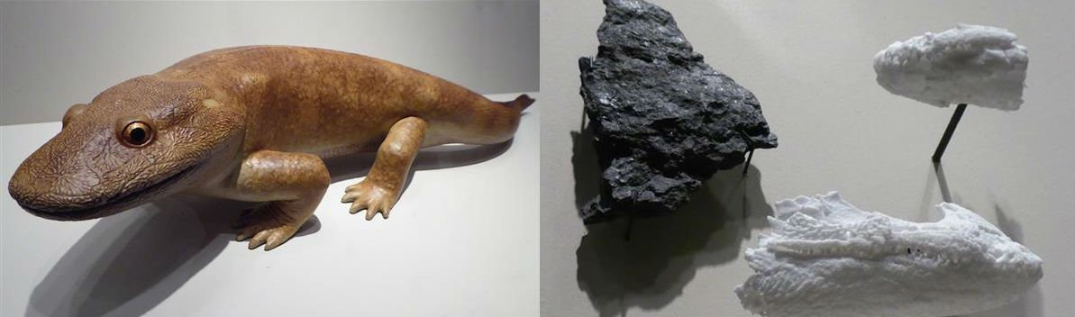 tetrapod fossil